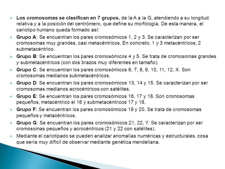 Los cromosomas se clasifican en 7 grupos, de la A a la G, atendiendo a su longitud relativa y a la posición del centrómero, que define su morfología.