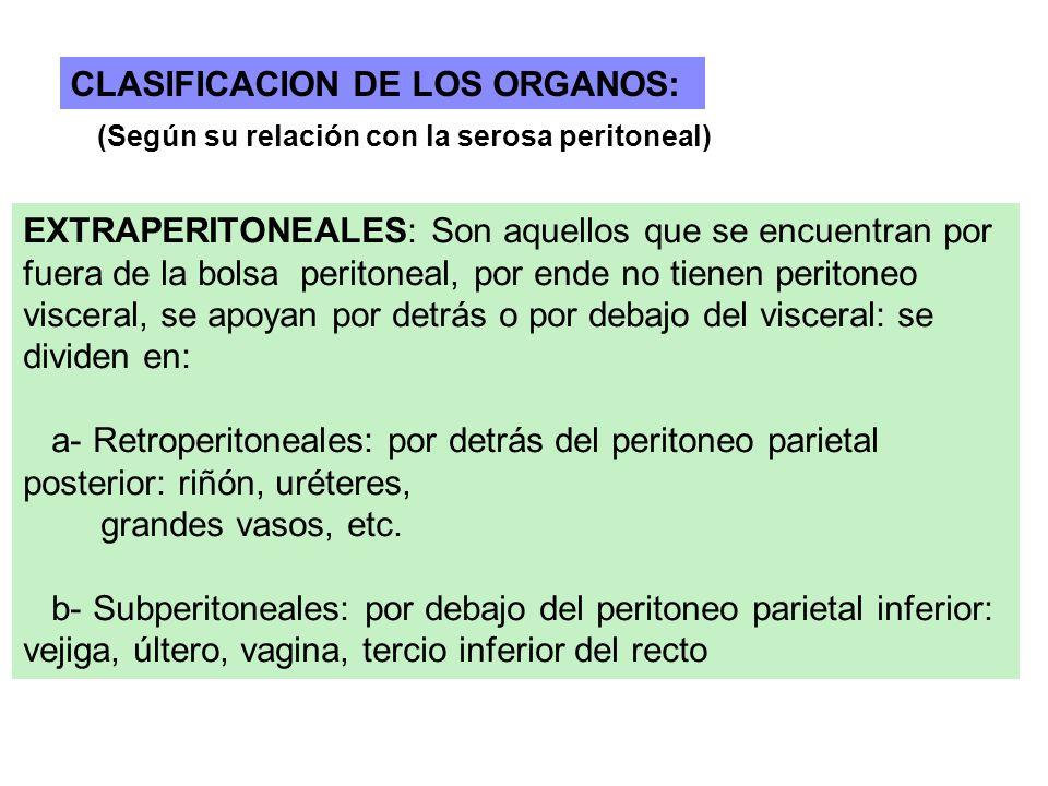 CLASIFICACION DE LOS ORGANOS: (Según su relación con la serosa peritoneal) EXTRAPERITONEALES: Son aquellos que se encuentran por fuera de la bolsa per