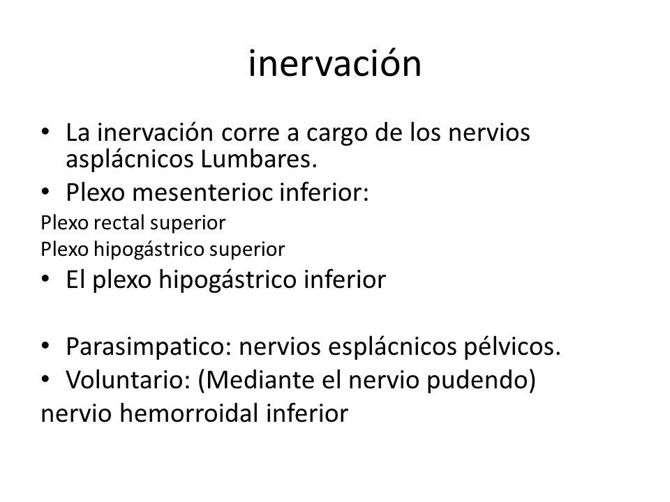 inervación La inervación corre a cargo de los nervios asplácnicos Lumbares. Plexo mesenterioc inferior: Plexo rectal superior Plexo hipogástrico super