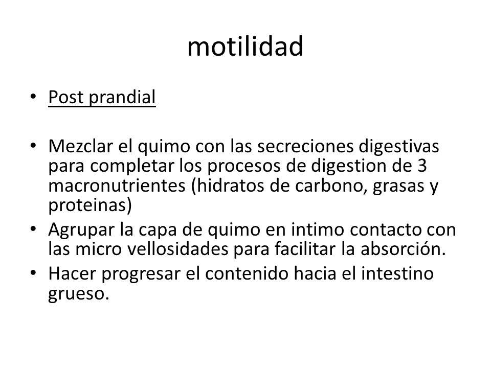 motilidad Post prandial Mezclar el quimo con las secreciones digestivas para completar los procesos de digestion de 3 macronutrientes (hidratos de car