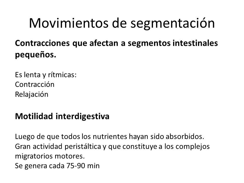 Movimientos de segmentación Contracciones que afectan a segmentos intestinales pequeños. Es lenta y rítmicas: Contracción Relajación Motilidad interdi