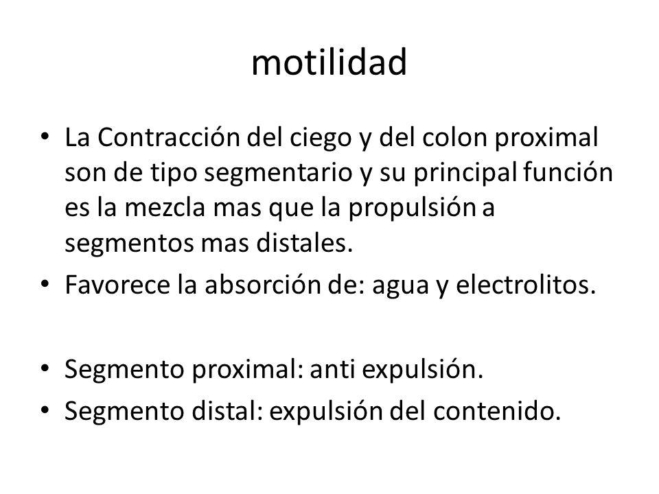 motilidad La Contracción del ciego y del colon proximal son de tipo segmentario y su principal función es la mezcla mas que la propulsión a segmentos