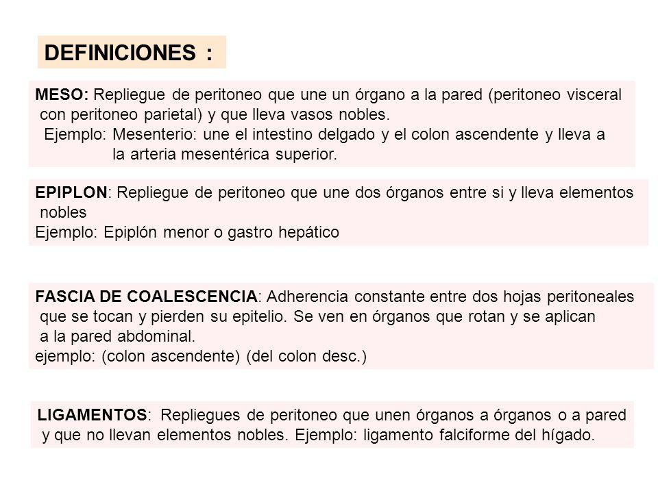 DEFINICIONES : MESO: Repliegue de peritoneo que une un órgano a la pared (peritoneo visceral con peritoneo parietal) y que lleva vasos nobles. Ejemplo