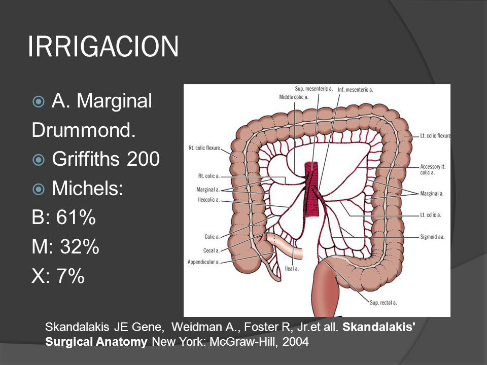 IRRIGACION A. Marginal Drummond. Griffiths 200 Michels: B: 61% M: 32% X: 7% Skandalakis JE Gene, Weidman A., Foster R, Jr.et all. Skandalakis' Surgica