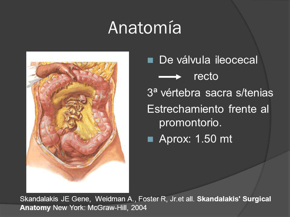 Anatomía De válvula ileocecal recto 3ª vértebra sacra s/tenias Estrechamiento frente al promontorio. Aprox: 1.50 mt Skandalakis JE Gene, Weidman A., F