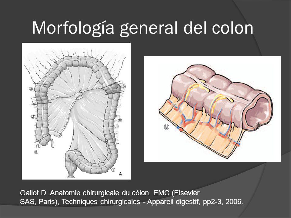 Morfología general del colon Gallot D. Anatomie chirurgicale du côlon. EMC (Elsevier SAS, Paris), Techniques chirurgicales - Appareil digestif, pp2-3,