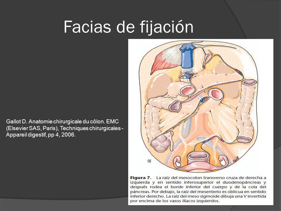 Facias de fijación Gallot D. Anatomie chirurgicale du côlon. EMC (Elsevier SAS, Paris), Techniques chirurgicales - Appareil digestif, pp 4, 2006.