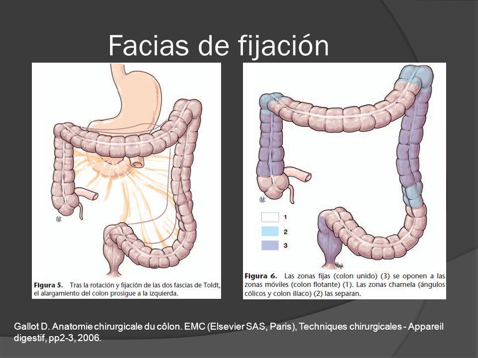 Facias de fijación Gallot D. Anatomie chirurgicale du côlon. EMC (Elsevier SAS, Paris), Techniques chirurgicales - Appareil digestif, pp2-3, 2006.