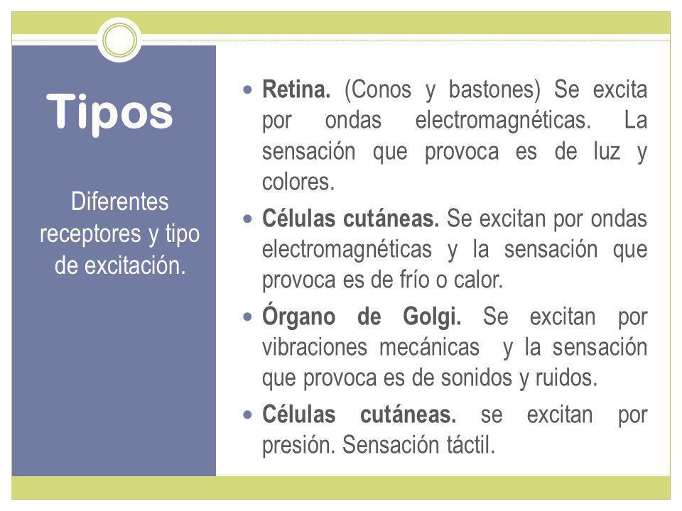Tipos Diferentes receptores y tipo de excitación.Retina.