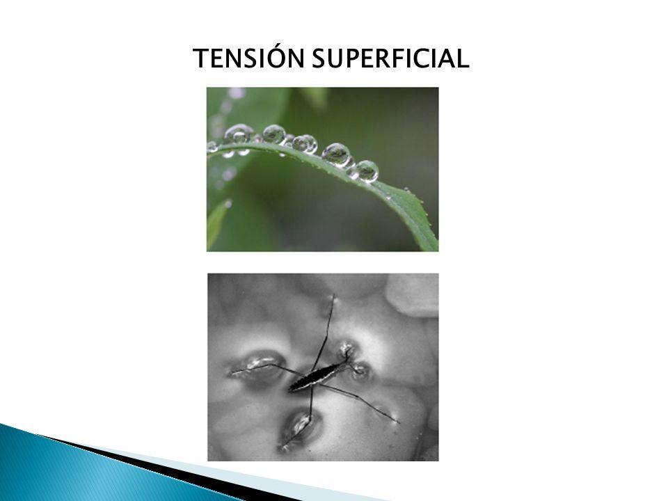 TENSIÓN SUPERFICIAL