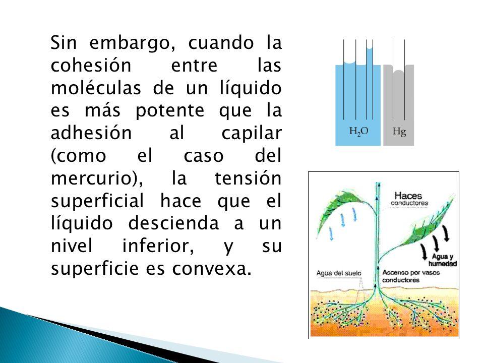 Sin embargo, cuando la cohesión entre las moléculas de un líquido es más potente que la adhesión al capilar (como el caso del mercurio), la tensión su