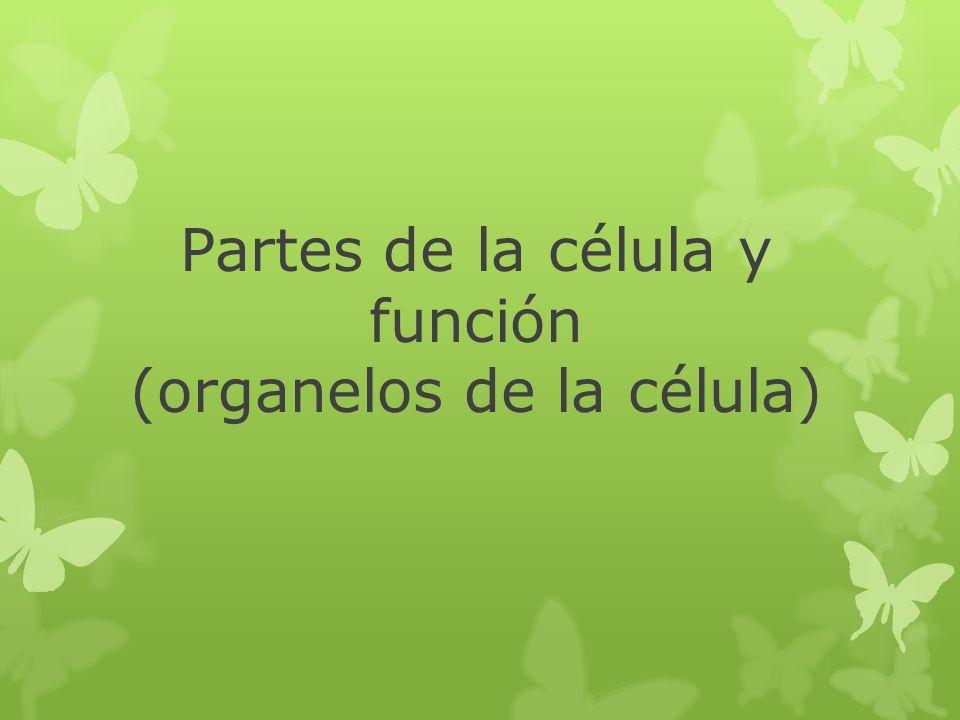 Partes de la célula y función (organelos de la célula)