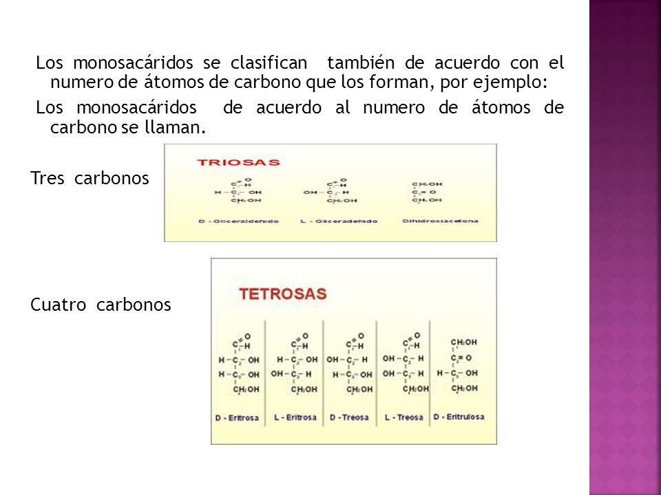 Los monosacáridos se clasifican también de acuerdo con el numero de átomos de carbono que los forman, por ejemplo: Los monosacáridos de acuerdo al num