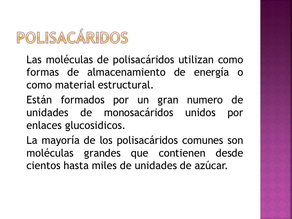 Las moléculas de polisacáridos utilizan como formas de almacenamiento de energía o como material estructural. Están formados por un gran numero de uni