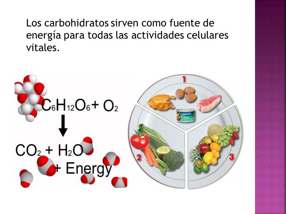 Los carbohidratos sirven como fuente de energía para todas las actividades celulares vitales.
