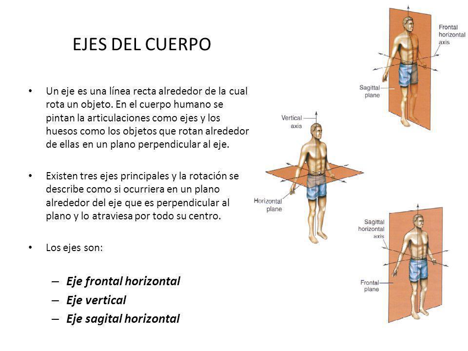 EJES DEL CUERPO Un eje es una línea recta alrededor de la cual rota un objeto. En el cuerpo humano se pintan la articulaciones como ejes y los huesos