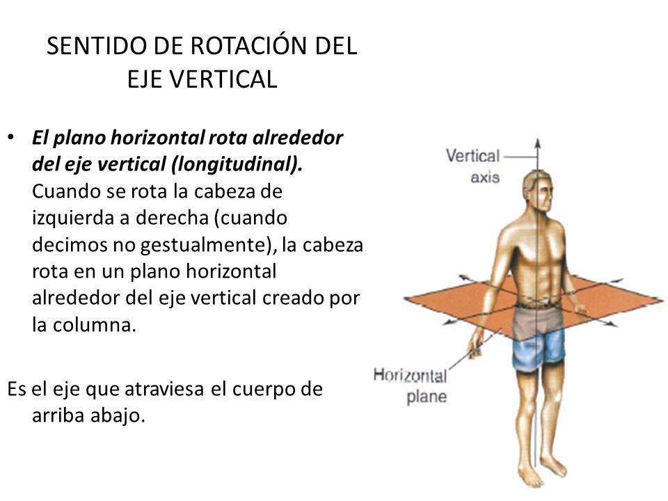 SENTIDO DE ROTACIÓN DEL EJE VERTICAL El plano horizontal rota alrededor del eje vertical (longitudinal). Cuando se rota la cabeza de izquierda a derec