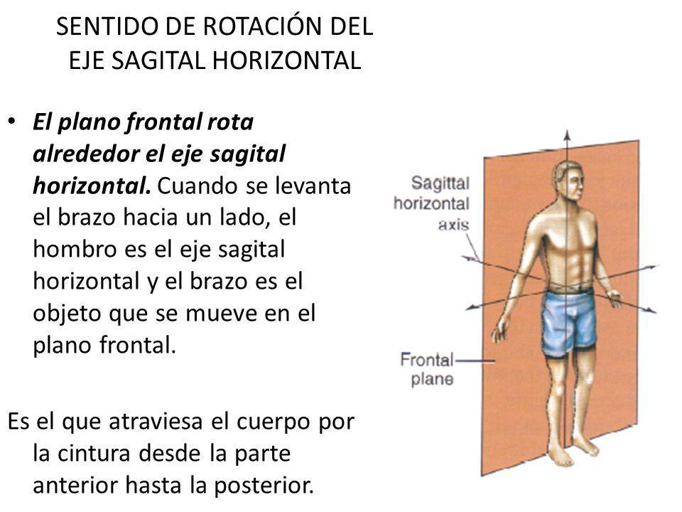 SENTIDO DE ROTACIÓN DEL EJE SAGITAL HORIZONTAL El plano frontal rota alrededor el eje sagital horizontal. Cuando se levanta el brazo hacia un lado, el