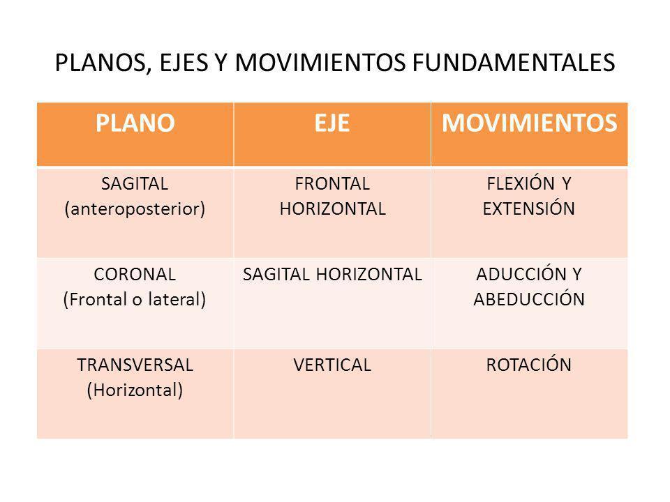 PLANOS, EJES Y MOVIMIENTOS FUNDAMENTALES PLANOEJEMOVIMIENTOS SAGITAL (anteroposterior) FRONTAL HORIZONTAL FLEXIÓN Y EXTENSIÓN CORONAL (Frontal o lateral) SAGITAL HORIZONTALADUCCIÓN Y ABEDUCCIÓN TRANSVERSAL (Horizontal) VERTICALROTACIÓN
