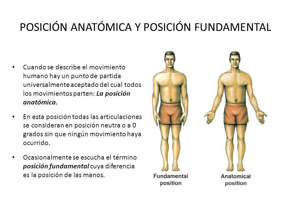 POSICIÓN ANATÓMICA Y POSICIÓN FUNDAMENTAL Cuando se describe el movimiento humano hay un punto de partida universalmente aceptado del cual todos los movimientos parten: La posición anatómica.