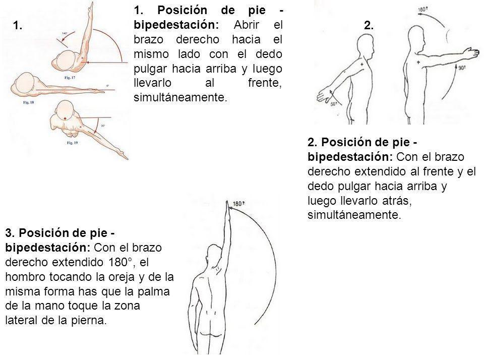1. Posición de pie - bipedestación: Abrir el brazo derecho hacia el mismo lado con el dedo pulgar hacia arriba y luego llevarlo al frente, simultáneam
