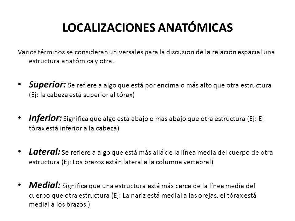 LOCALIZACIONES ANATÓMICAS Varios términos se consideran universales para la discusión de la relación espacial una estructura anatómica y otra. Superio