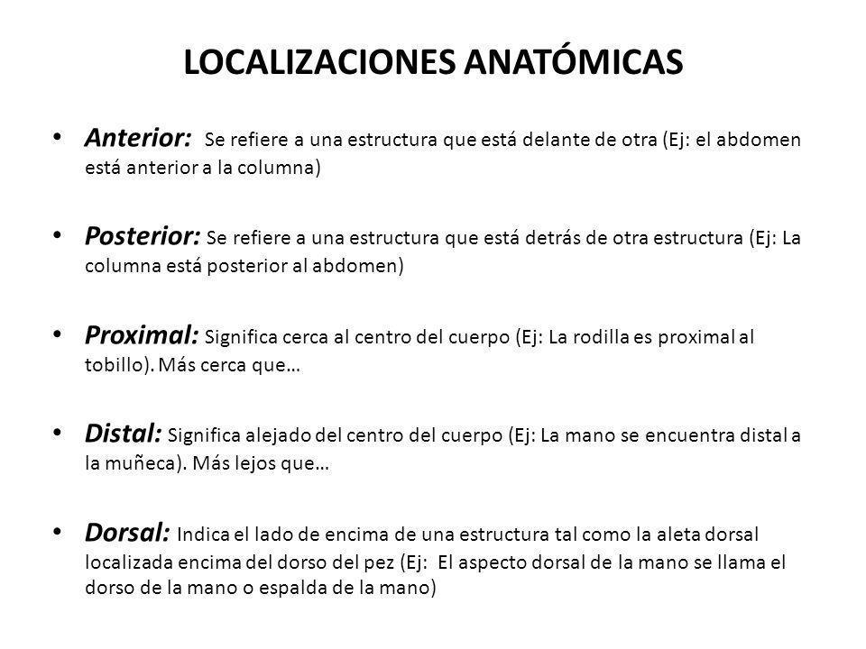 LOCALIZACIONES ANATÓMICAS Anterior: Se refiere a una estructura que está delante de otra (Ej: el abdomen está anterior a la columna) Posterior: Se ref