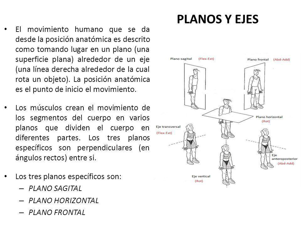 PLANOS Y EJES El movimiento humano que se da desde la posición anatómica es descrito como tomando lugar en un plano (una superficie plana) alrededor de un eje (una línea derecha alrededor de la cual rota un objeto).