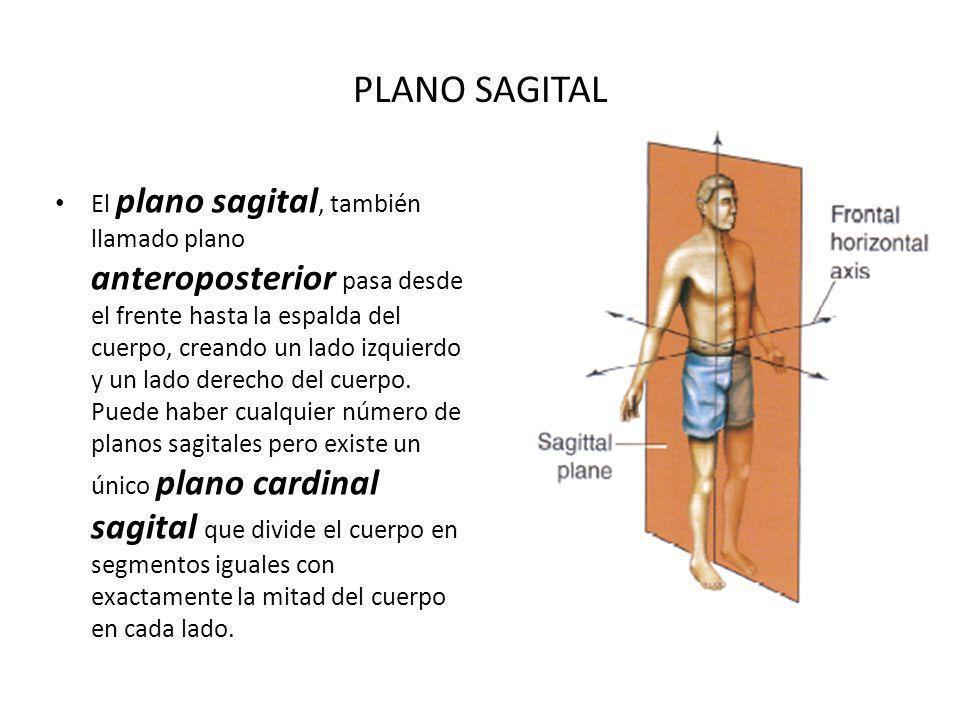 PLANO SAGITAL El plano sagital, también llamado plano anteroposterior pasa desde el frente hasta la espalda del cuerpo, creando un lado izquierdo y un lado derecho del cuerpo.