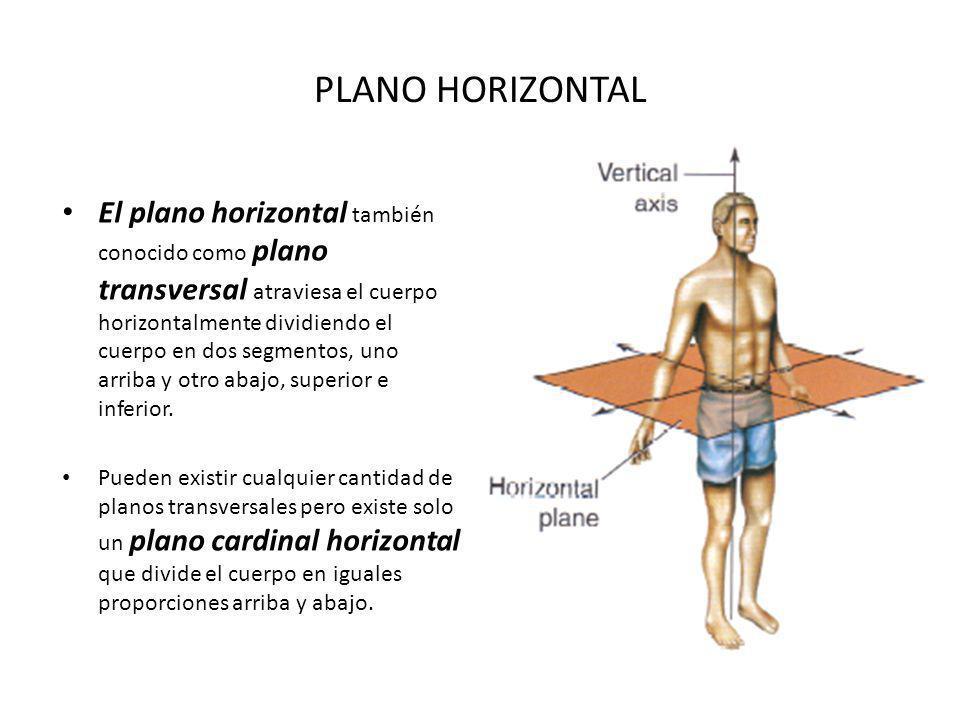 PLANO HORIZONTAL El plano horizontal también conocido como plano transversal atraviesa el cuerpo horizontalmente dividiendo el cuerpo en dos segmentos, uno arriba y otro abajo, superior e inferior.