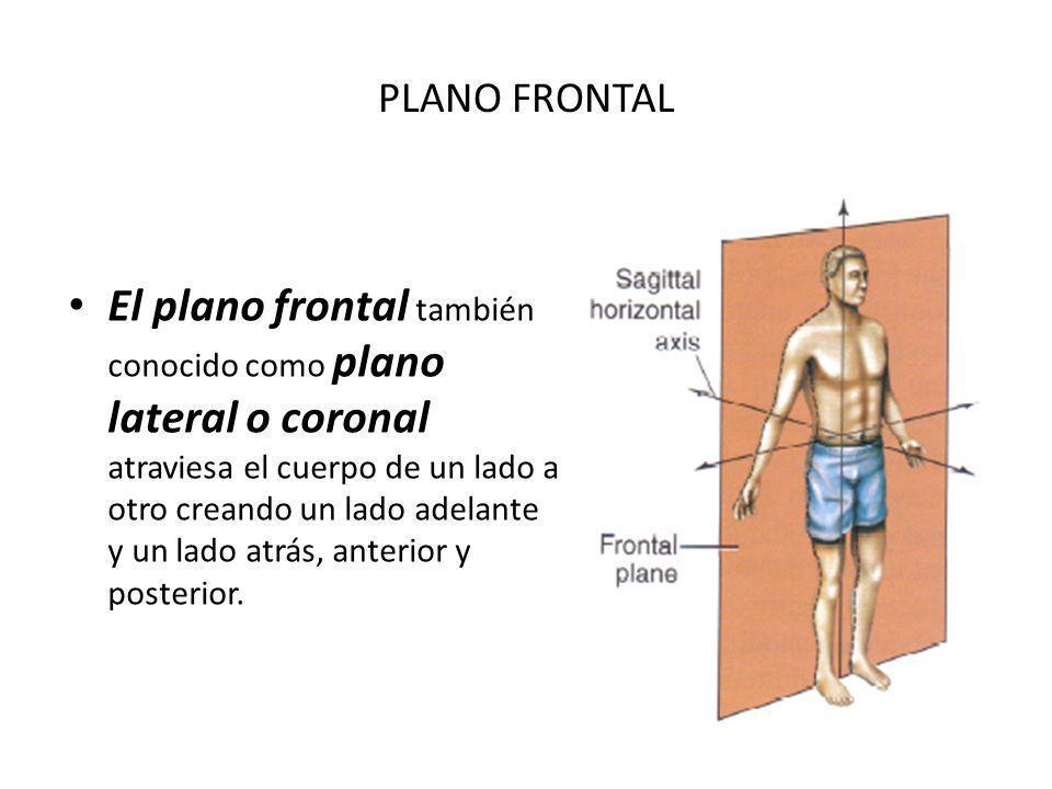 PLANO FRONTAL El plano frontal también conocido como plano lateral o coronal atraviesa el cuerpo de un lado a otro creando un lado adelante y un lado atrás, anterior y posterior.
