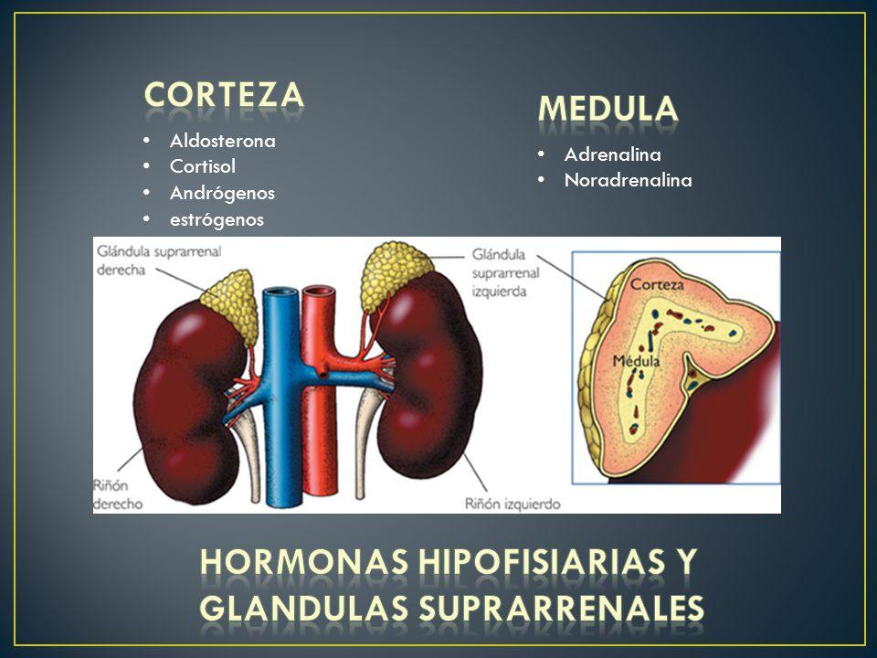 Aldosterona Cortisol Andrógenos estrógenos Adrenalina Noradrenalina