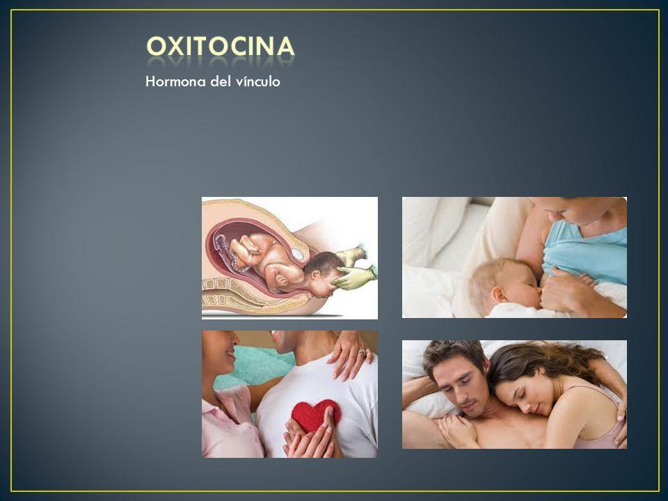 Vínculos afectivos, tiene su pico En períodos de enamoramiento Contracciones del útero Durante el parto y el sexo Estimula su secreción la Succión en