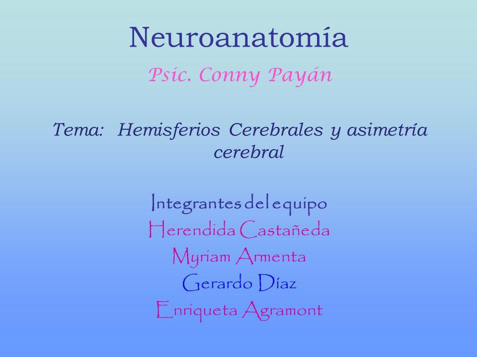 Neuroanatomía Psic. Conny Payán Tema: Hemisferios Cerebrales y asimetría cerebral Integrantes del equipo Herendida Castañeda Myriam Armenta Gerardo Dí