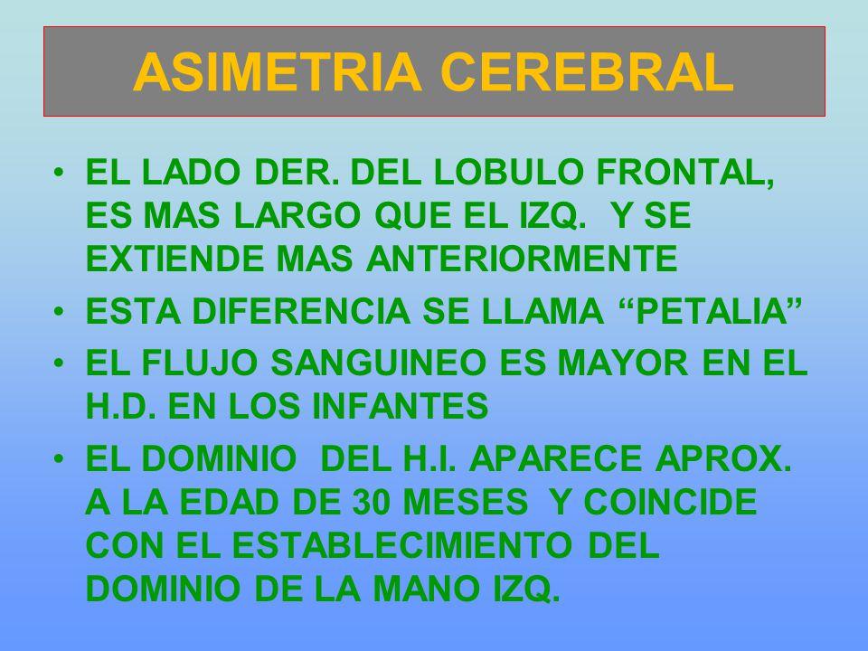 ASIMETRIA CEREBRAL EL LADO DER.DEL LOBULO FRONTAL, ES MAS LARGO QUE EL IZQ.