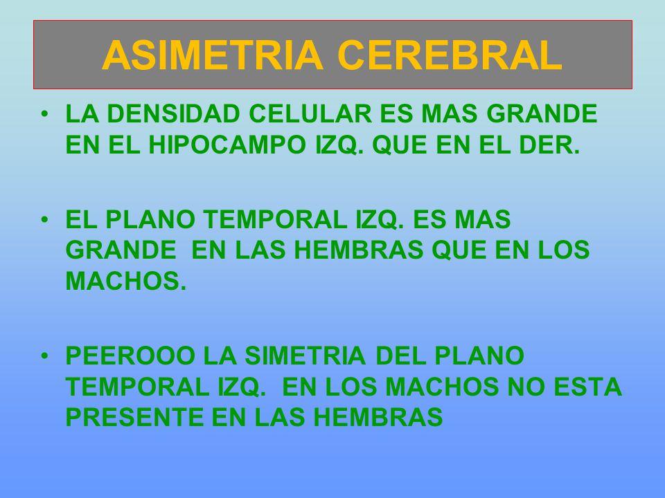 ASIMETRIA CEREBRAL LA DENSIDAD CELULAR ES MAS GRANDE EN EL HIPOCAMPO IZQ.
