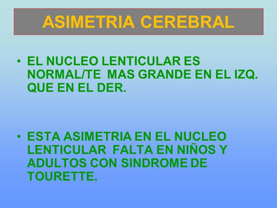 ASIMETRIA CEREBRAL EL NUCLEO LENTICULAR ES NORMAL/TE MAS GRANDE EN EL IZQ. QUE EN EL DER. ESTA ASIMETRIA EN EL NUCLEO LENTICULAR FALTA EN NIÑOS Y ADUL