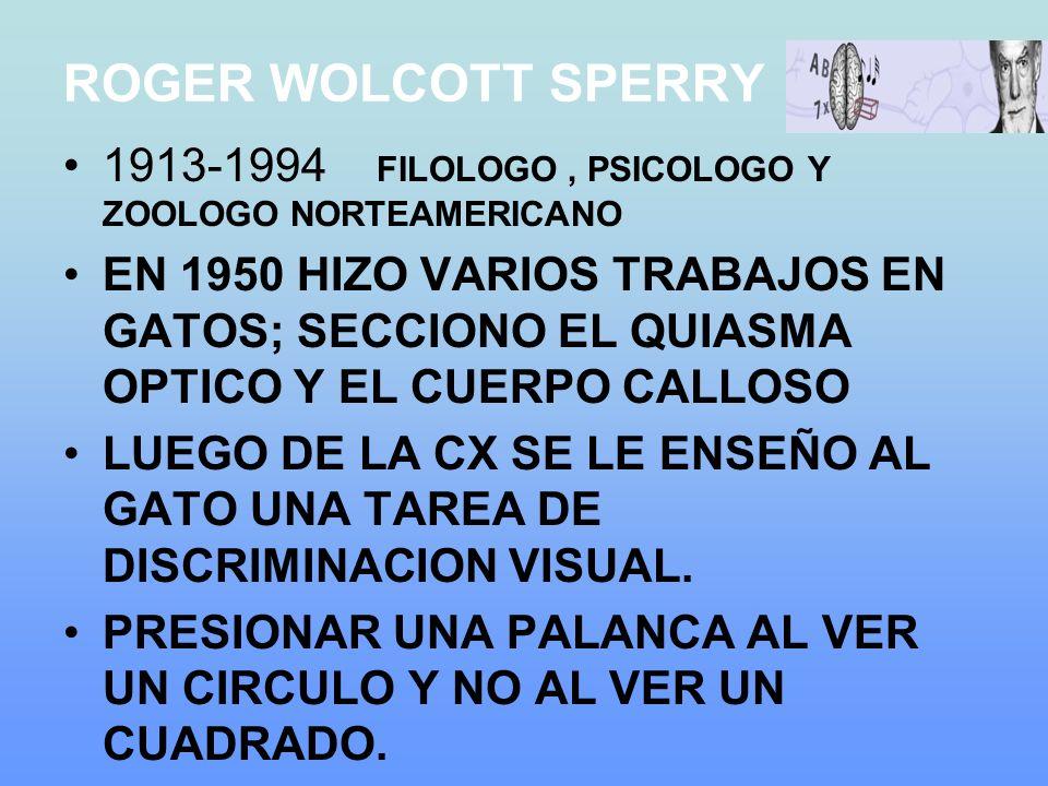 ROGER WOLCOTT SPERRY 1913-1994 FILOLOGO, PSICOLOGO Y ZOOLOGO NORTEAMERICANO EN 1950 HIZO VARIOS TRABAJOS EN GATOS; SECCIONO EL QUIASMA OPTICO Y EL CUERPO CALLOSO LUEGO DE LA CX SE LE ENSEÑO AL GATO UNA TAREA DE DISCRIMINACION VISUAL.