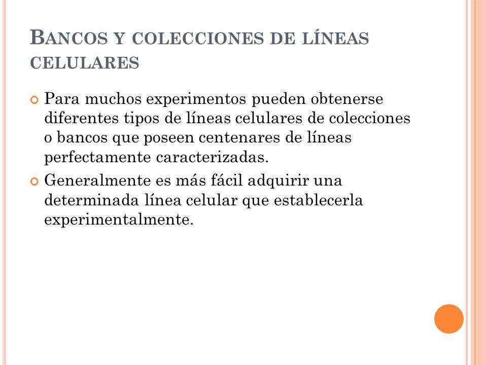 B ANCOS Y COLECCIONES DE LÍNEAS CELULARES Para muchos experimentos pueden obtenerse diferentes tipos de líneas celulares de colecciones o bancos que p