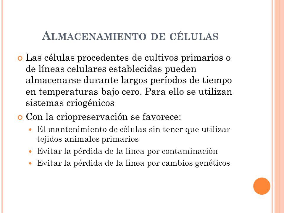 A LMACENAMIENTO DE CÉLULAS Las células procedentes de cultivos primarios o de líneas celulares establecidas pueden almacenarse durante largos períodos