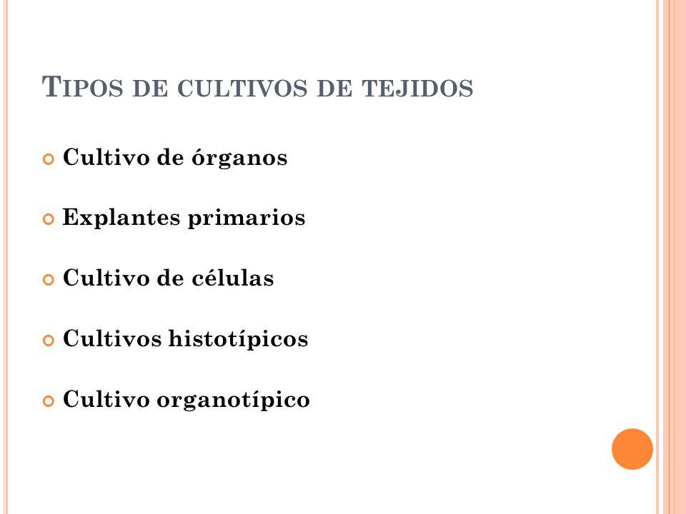 T IPOS DE CULTIVOS DE TEJIDOS Cultivo de órganos Explantes primarios Cultivo de células Cultivos histotípicos Cultivo organotípico