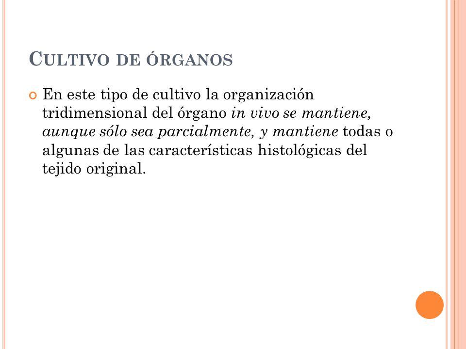 C ULTIVO DE ÓRGANOS En este tipo de cultivo la organización tridimensional del órgano in vivo se mantiene, aunque sólo sea parcialmente, y mantiene to