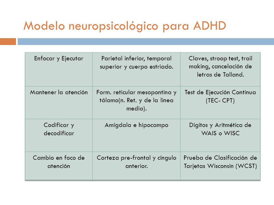 Lóbulo frontal Regula el foco de atención.