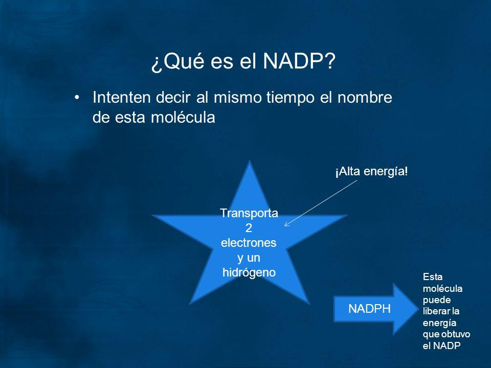 ¿Qué es el NADP? Intenten decir al mismo tiempo el nombre de esta molécula Transporta 2 electrones y un hidrógeno ¡Alta energía! NADPH Esta molécula p