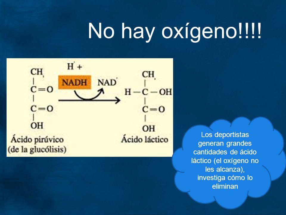 No hay oxígeno!!!! Los deportistas generan grandes cantidades de ácido láctico (el oxígeno no les alcanza), investiga cómo lo eliminan