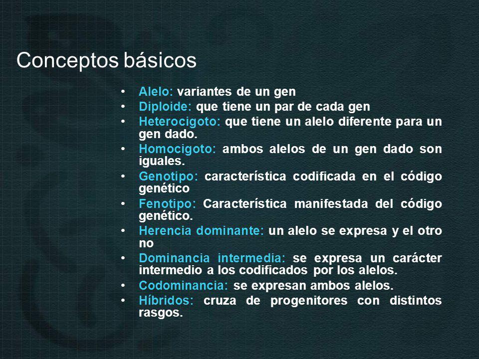 Conceptos básicos Alelo: variantes de un gen Diploide: que tiene un par de cada gen Heterocigoto: que tiene un alelo diferente para un gen dado.