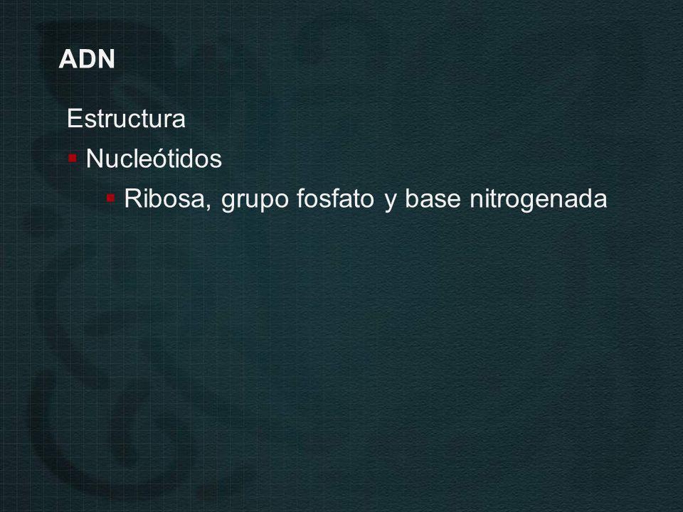 Estructura Nucleótidos Ribosa, grupo fosfato y base nitrogenada ADN