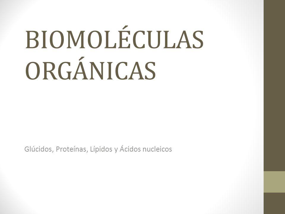 BIOMOLÉCULAS ORGÁNICAS Glúcidos, Proteínas, Lípidos y Ácidos nucleicos