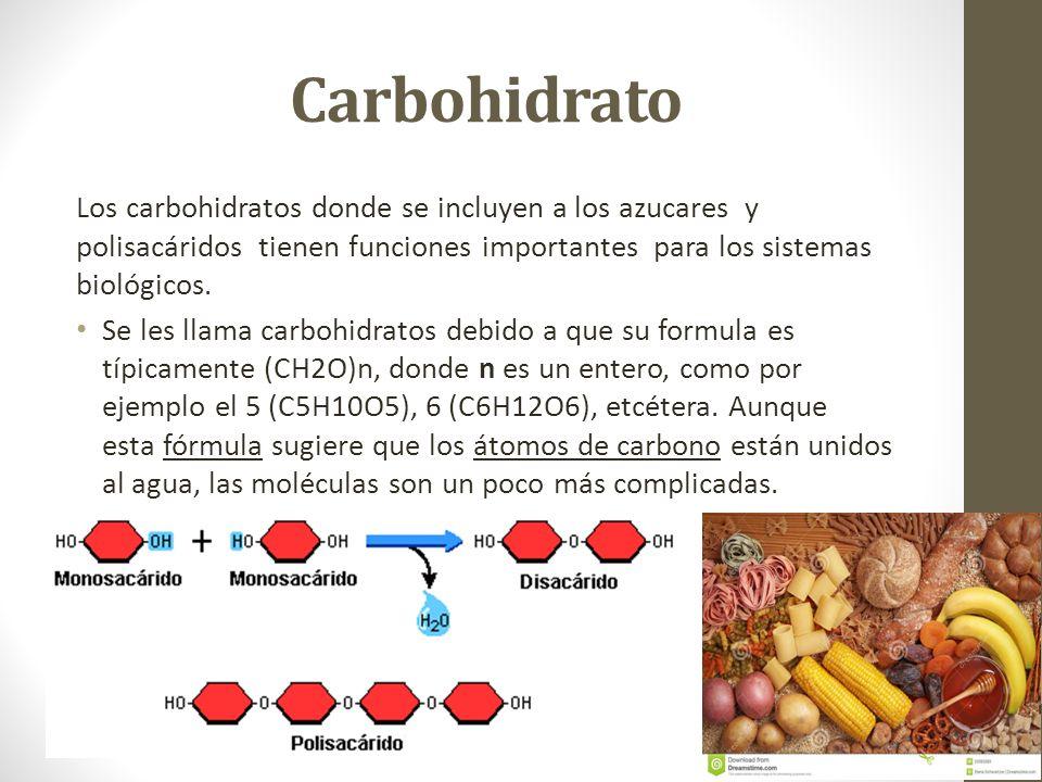 Carbohidrato Los carbohidratos donde se incluyen a los azucares y polisacáridos tienen funciones importantes para los sistemas biológicos. Se les llam