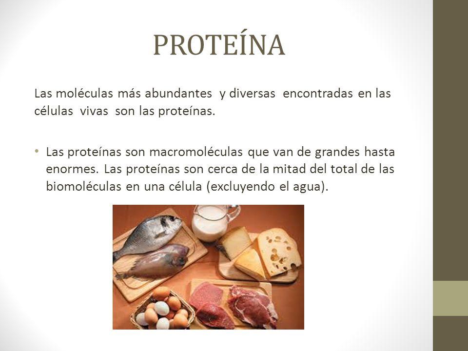 PROTEÍNA Las moléculas más abundantes y diversas encontradas en las células vivas son las proteínas. Las proteínas son macromoléculas que van de grand
